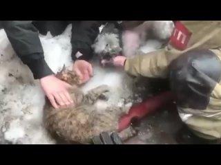 Подольские пожарные спасли кота и собаку
