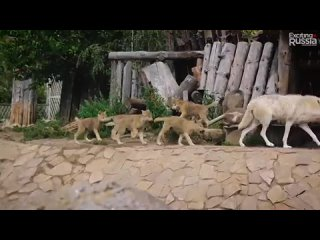 Ижевский зоопарк. Государственный зоологический парк Удмуртии (The Izhevsk Zoo)