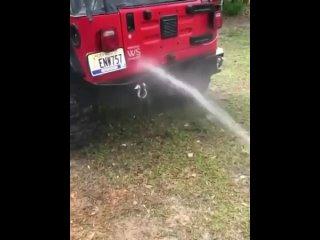 Собака пытается поймать воду, идущую из шланга, пока хозяин моет свою машину
