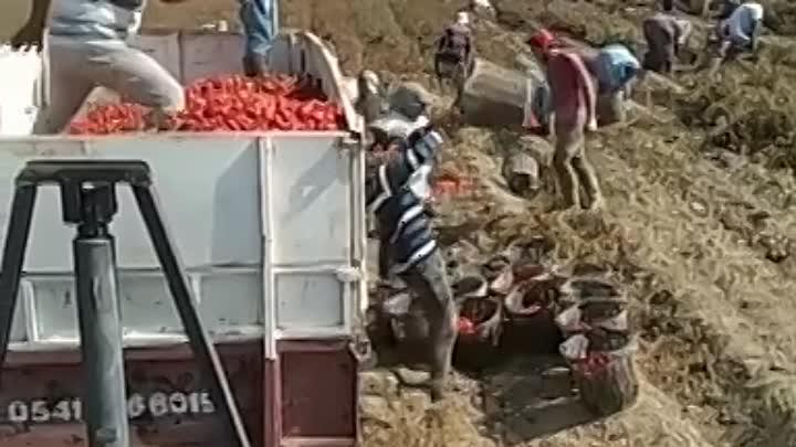 Технология уборки урожая