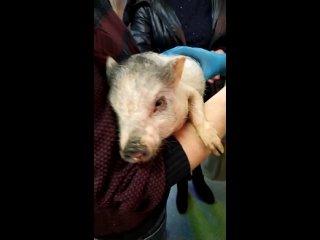 Работу трогательного зоопарка потребовала проверить депутат гордумы Ростова