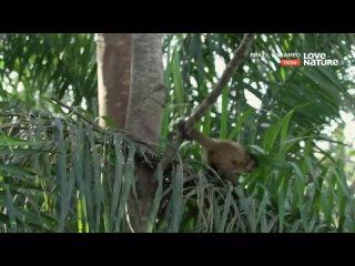 [Predator And Game HD] Дикая Бразилия 1 серия Сад обезьян