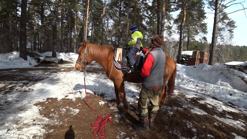 Обучение езде на лошади