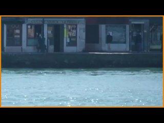 Rebecca Rambar - Italie : Deux dauphins ont t aperus en train de nager dans l'eau d'un canal de Venise. Les eaux gnralement somb