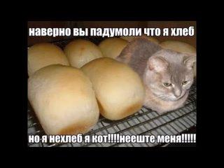 Вы наверное подумали что я хлеб, но я не хлеб я кот не ешьте меня.  ( 720 X 1280 ).mp4