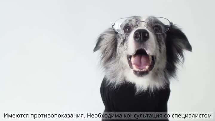Бравекто - средство от клещей и блох для собак (720p)