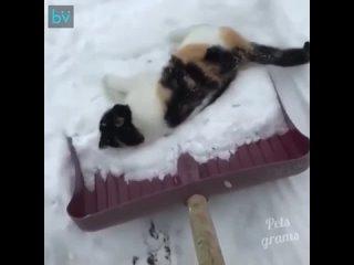 Кошка, которая любит снег - Идеи для сада | дача | ландшафт| огород