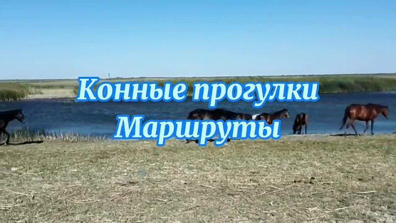 Конные прогулки, обучение верховой езде.mp4