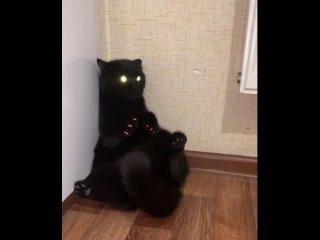 Черная пантера)