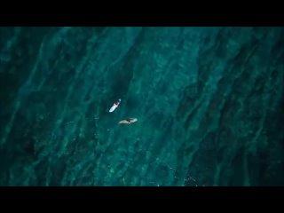 The Ocean(Mike  Martin)