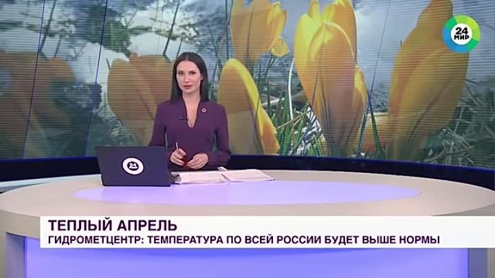 Собака украла микрофон у корреспондента во время прямого эфира выпуска новостей