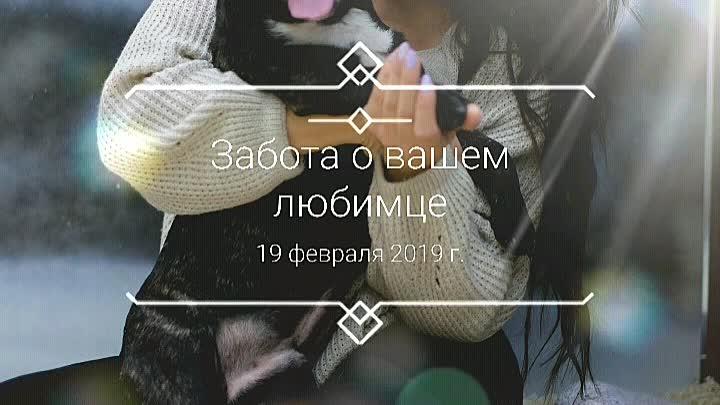 Забота о вашем любимце.mp4