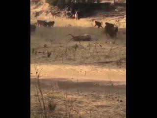 Леопард – животное «невидимка». Они отлично маскируются в окружающей среде, очень тихо передвигаются.