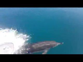 дельфины Абхазия 2020 сентябрь