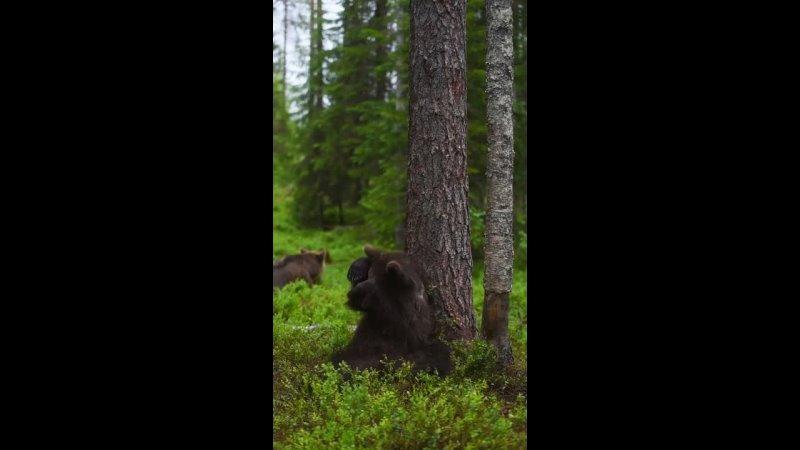 Дневник Лесной Нимфы