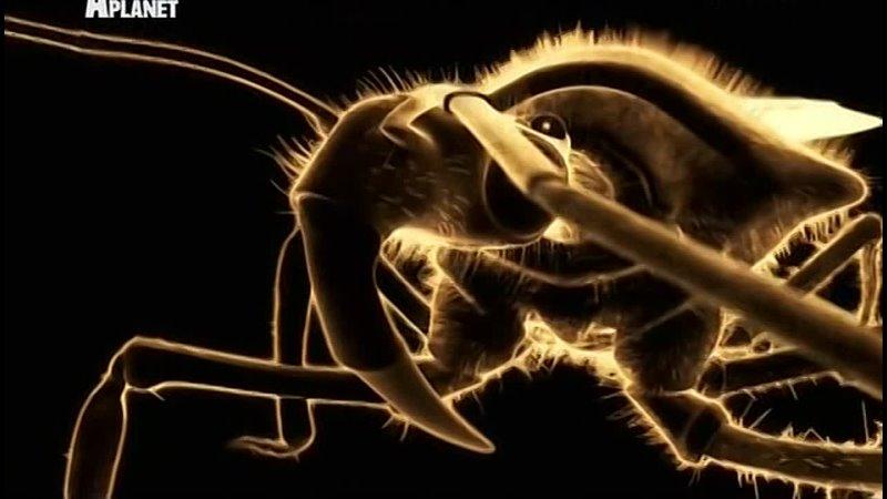Войны жуков гигантов 10 я серия Австралия США