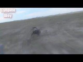 [Суприм Шоу] Дикий Кабан Секач против собак волков леопарда и других хищников