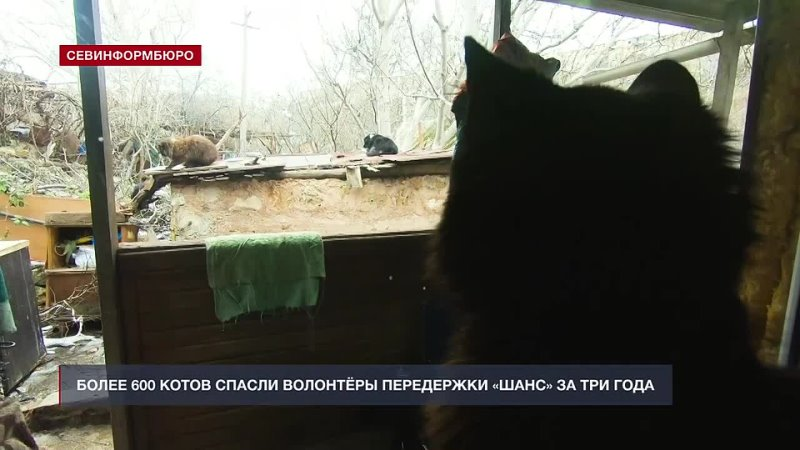 Более 600 котов спасли волонтёры передержки Шанс за три года mp4