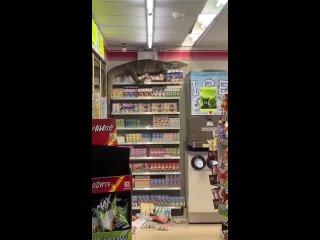 В Таиланде варан забрался в магазин