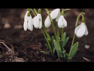 🌸🌿Уже идёт потихоньку...Неуверенно, тихо, но идёт к нам весна.Оттаят снега и наши сердца. Грядёт Великая Пасха!Любить. Радов