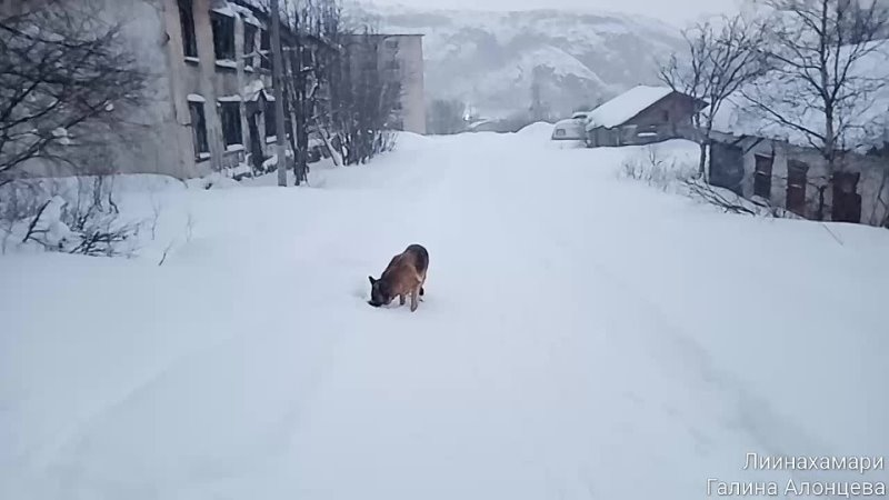 Как я и говорила, что туча снеговая нас догонит!