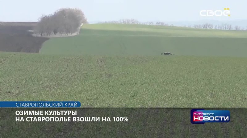 Озимые культуры на Ставрополье взошли на 100. Несмотря на то, что сев проходил при остром дефиците влаги, осадки с января по ма