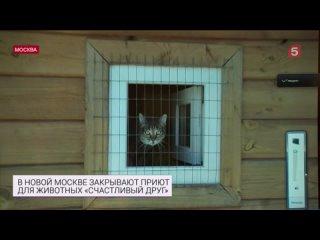 ВГосдуме занялись спасением приюта для животных