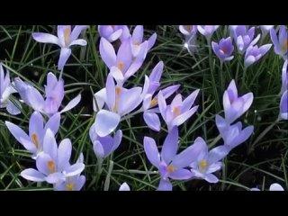 весенний очень красивый видео
