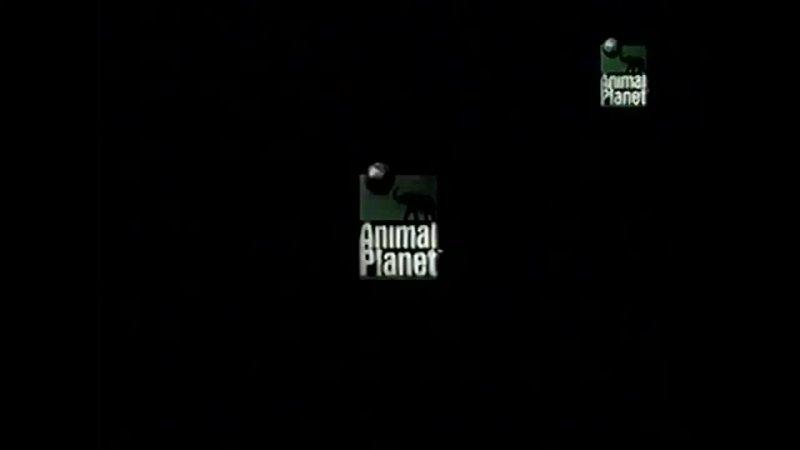 Все рекламные заставки Animal planet 2000 2005