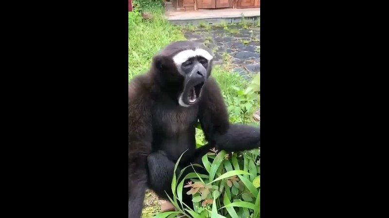 Mundoprologo on Instagram_ -__--_ monkeylifelove _°_°_°_°_°__monkey _animallove _funnyanimals _Reels _Animal _Macaco _funny(M