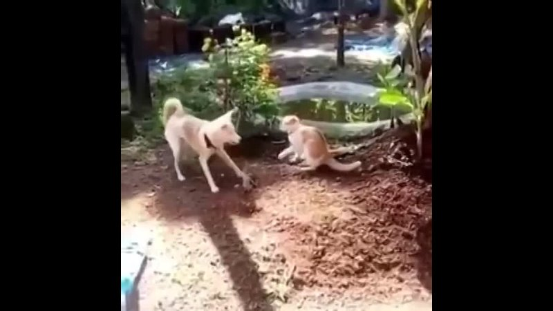 Cat-meets-the-Woof-Jitsu.mp4