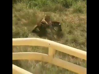 Мать спасает свое дитя.