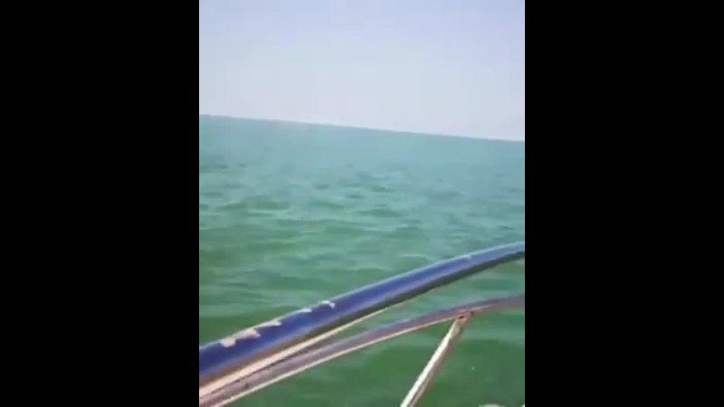 Два океана mp4