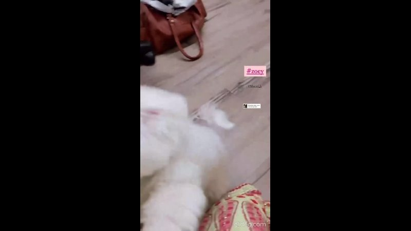 Счастливый питомец Кунала Джайсингха собачка Зои