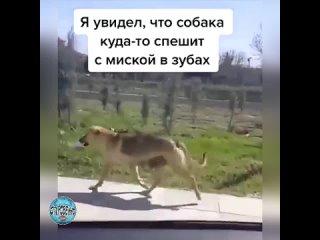 Трогательно! Люди будьте добрее к животным.