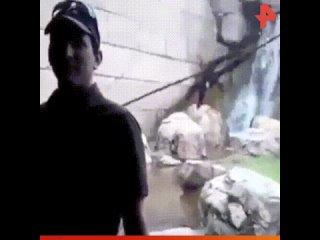 Обезьяна пытается напасть на человека / #РЕНТВ