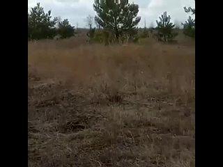 🇷🇺 И снова видео из Воронежа. И снова в твиттере переполох🤷♀️