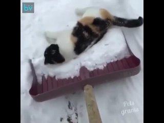 Кошка__которая_любит_снег_-_Идеи_для_сада___дача___ландшафт_