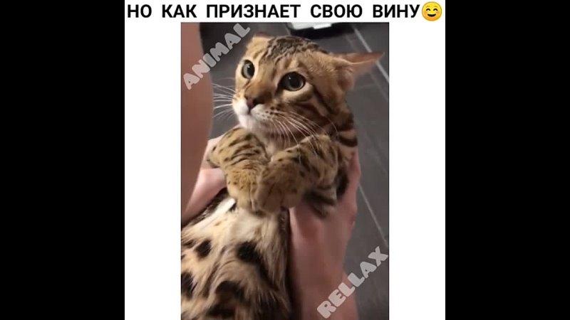 Ссал на мою кровать Мемарик Приколы mem new юмор vine мемы новые треш