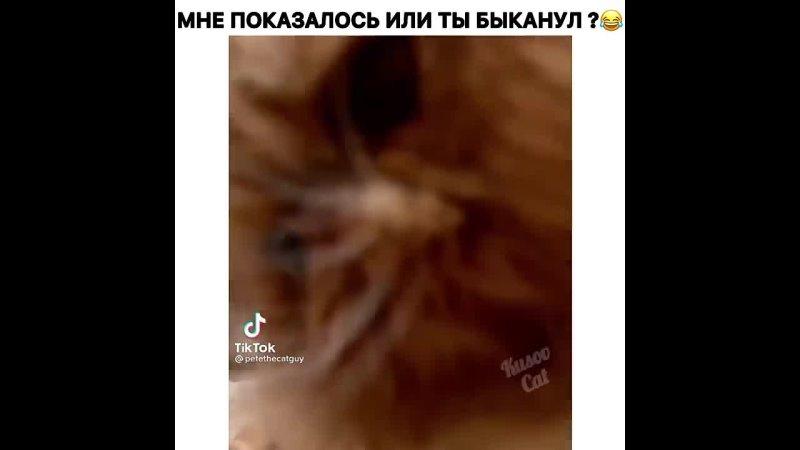 Это кошачий дом и он хочет узнать что тут делает человек с телефоном 😂