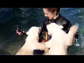 Арктика-Аврора и Ермак