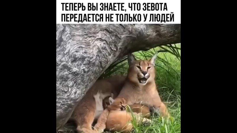 Животные более настоящие чем люди Они не хотят тебе льстить не хотят производить на тебя какое то впечатление Ничего показно