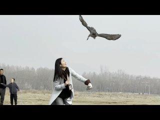 """25-летний китайский реабилитолог хищных птиц и его """"пациенты"""""""