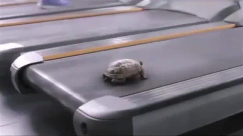 Speed turtle