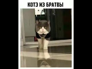 Кот_из_братвы_прикол!.mp4