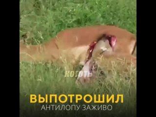 КОГОТЬ РЕАЛЬНЫЙ ЖИВОТНЫ МИР.mp4