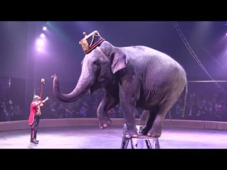 Слон_срет_в_цирке.