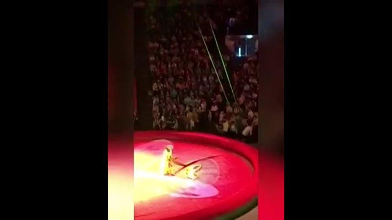 Питон бежал в Казанском цирке 2018 июнь