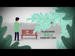 «Клещи и чем они опасны» - серия роликов для медицинского центра «Аскомед»