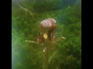 Спил дерева на высоте без страховки